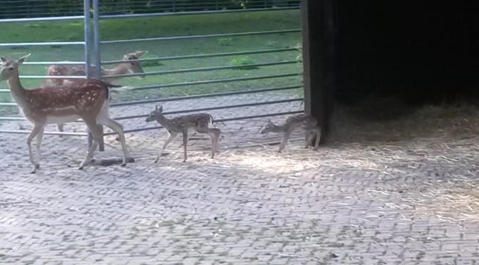 Tweeling-hertjes geboren!