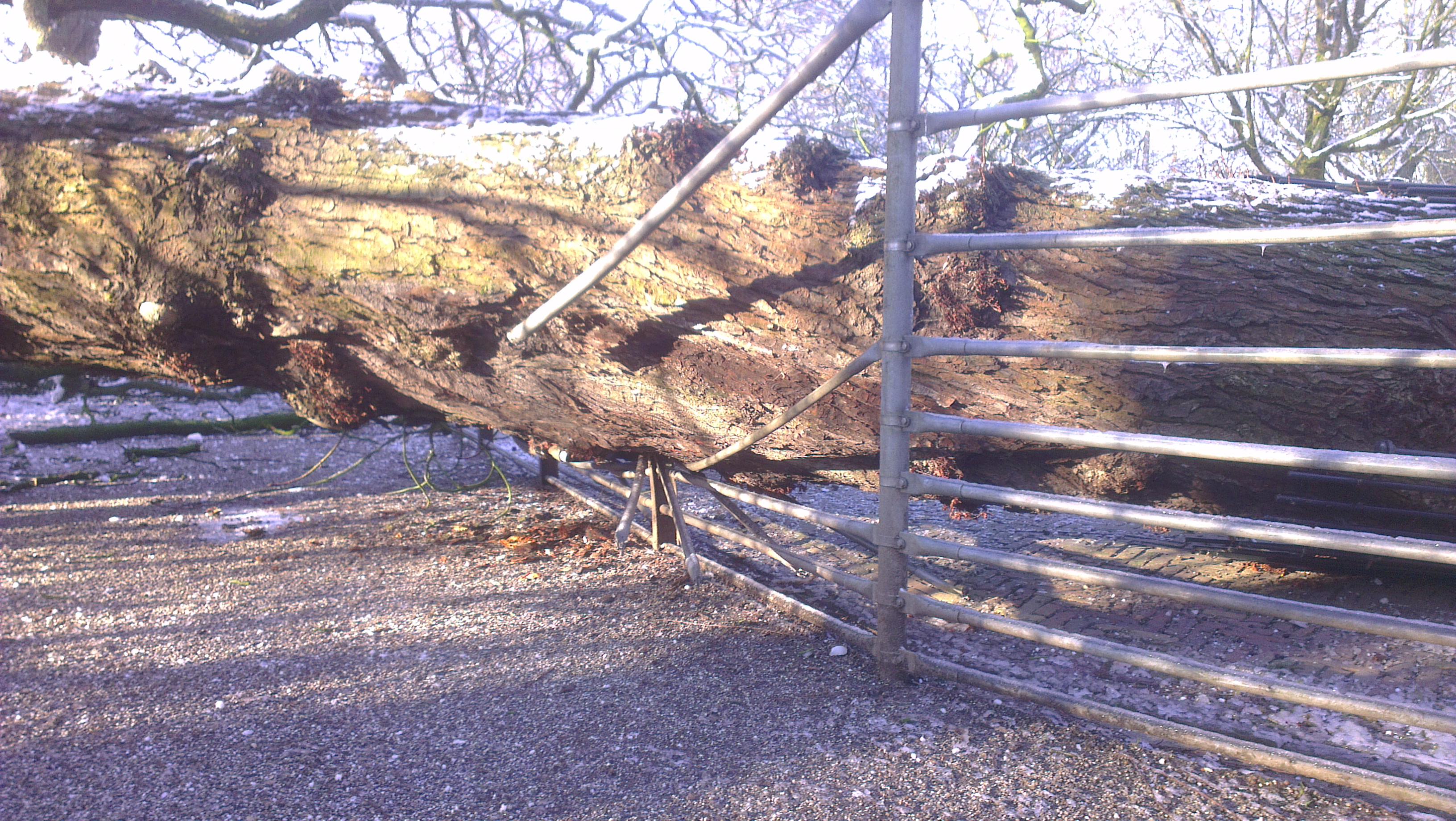 Paardenkastanje (#113) omgevallen door sneeuwval