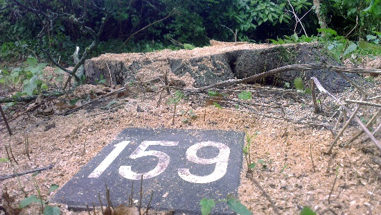 Tamme kastanje #159