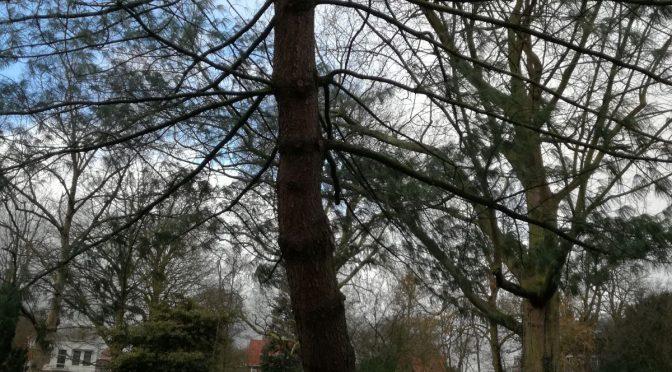 Tranenden en twee coniferen begeven het door westerstorm