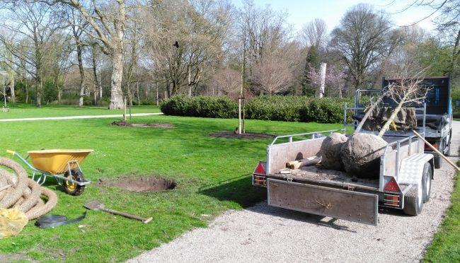 Nog drie nieuwe bomen geplant
