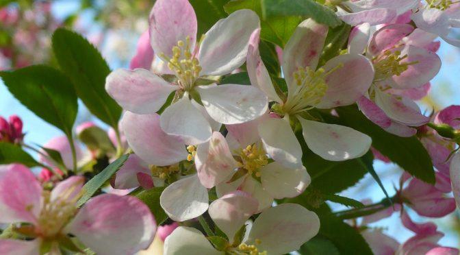 Veel nieuwe lentefoto's toegevoegd aan BomenWijzer