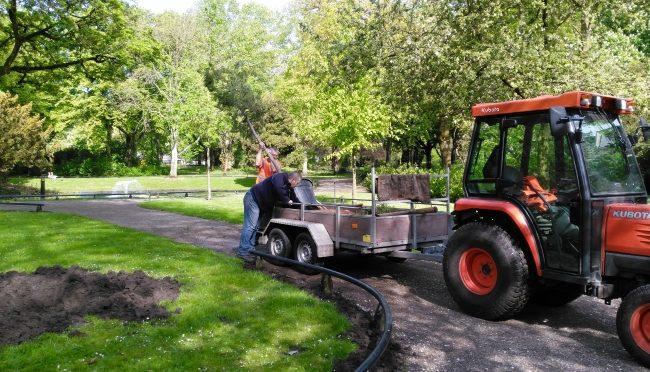 Twee laatste bomen geplant – voorjaar 2018