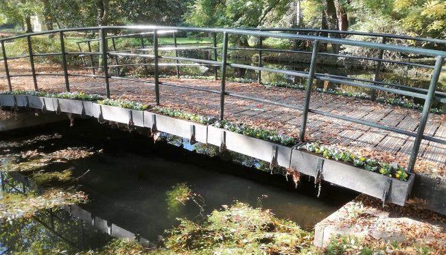 Nieuwe violen voor brug