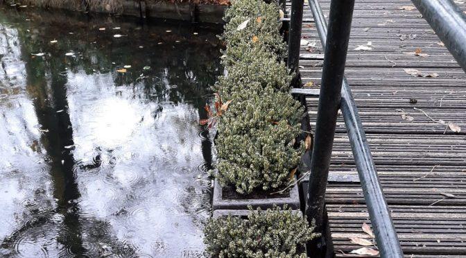 Winterheide aan de brug